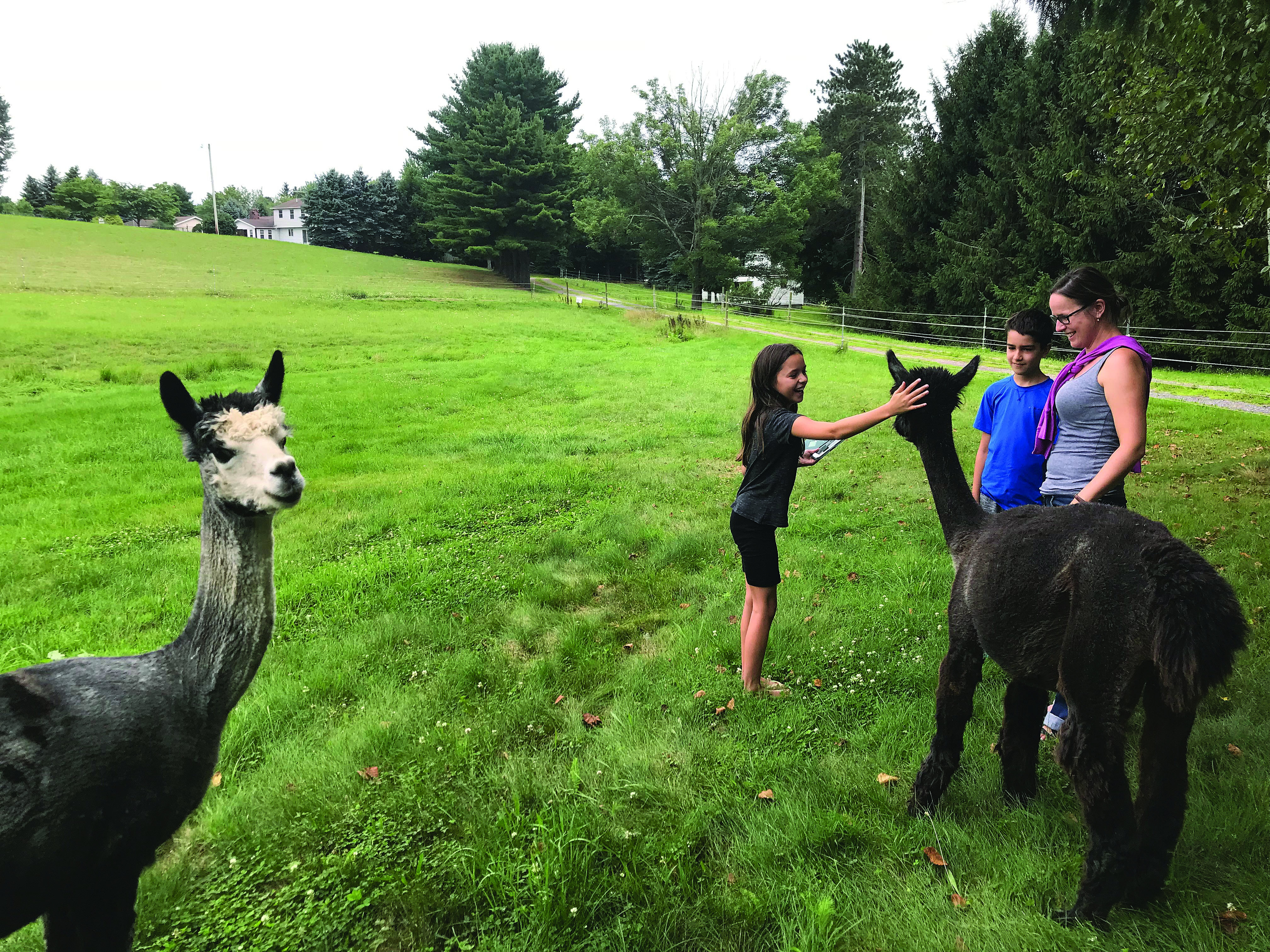 A FAMILY AFFAIR: A family feeds and pets some of the alpacas at LaCroix Alpaca in Oliveburg, Pa. The business is owned by United EC members Patti and George LaCroix.